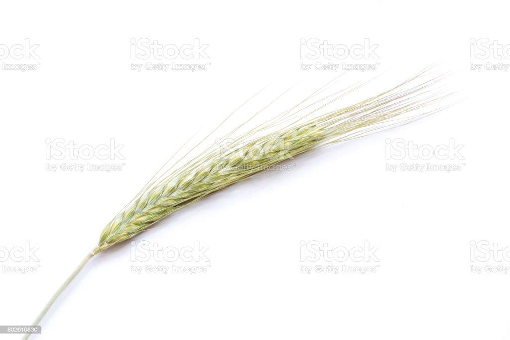 Rye ear on white background, close up stock photo