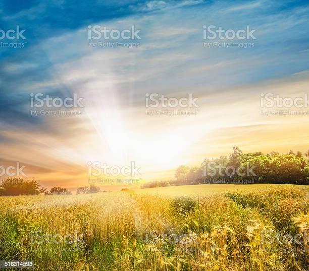 Photo of Rye field at sunset, landscape