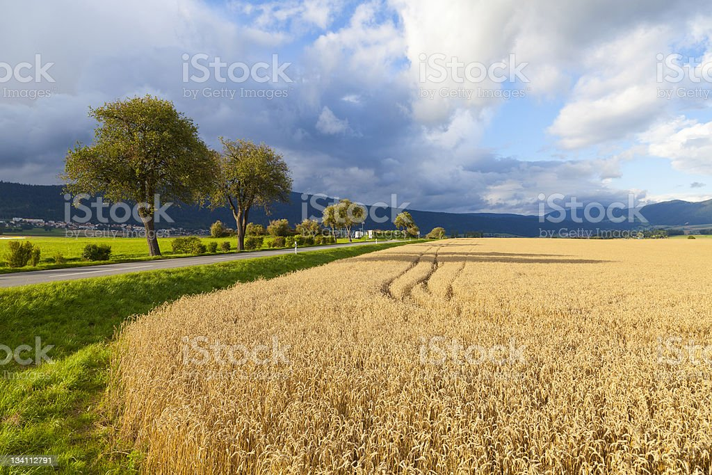 Rye Field in Neuchatel, Switzerland stock photo
