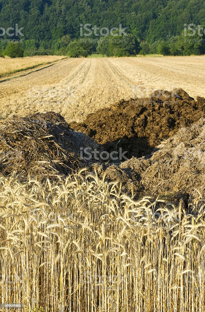 Rye fields and manure heaps royalty-free stock photo