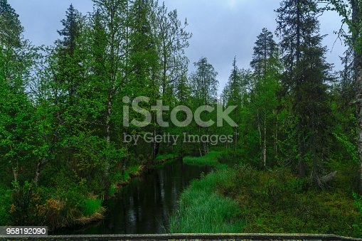 Stream and forest along the Rykimakero Trail, in Pyha-Luosto National Park, Lapland, Finland