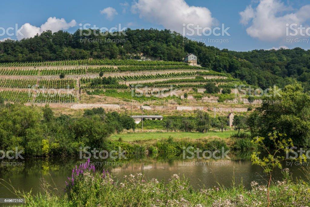 Saale Unstrut Wine Naumburg stock photo
