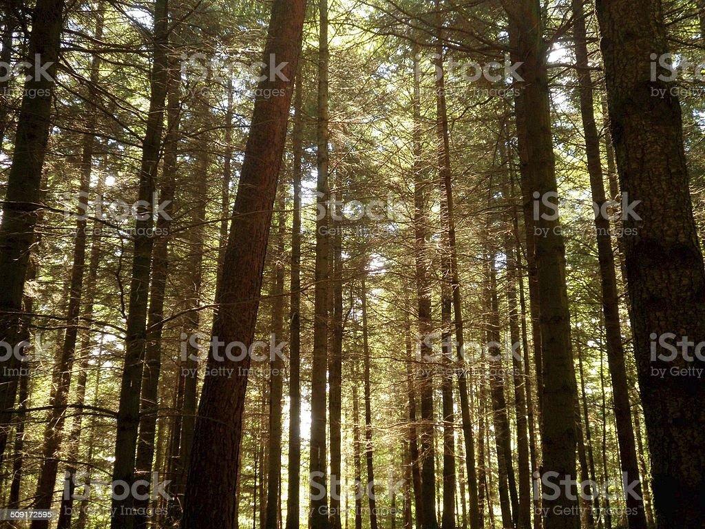 Saarbrucken Park Forest stock photo