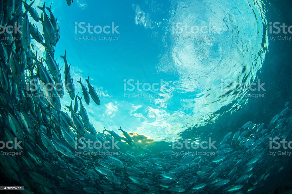 Sabah state A school of fish in Malaysia 2015 Stock Photo