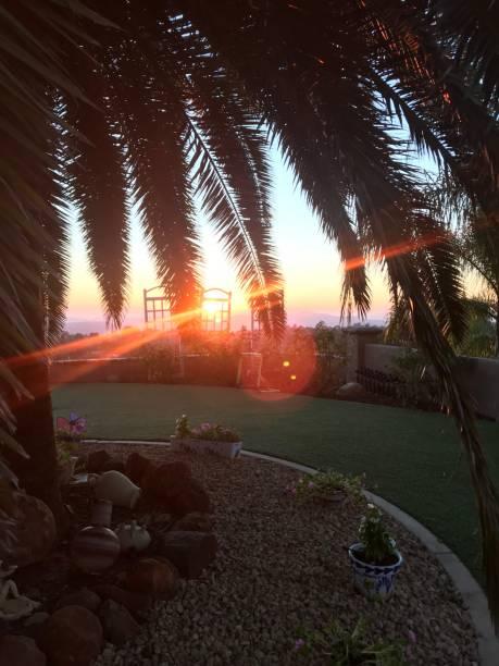 Sabel Palm Tree at sunset stock photo