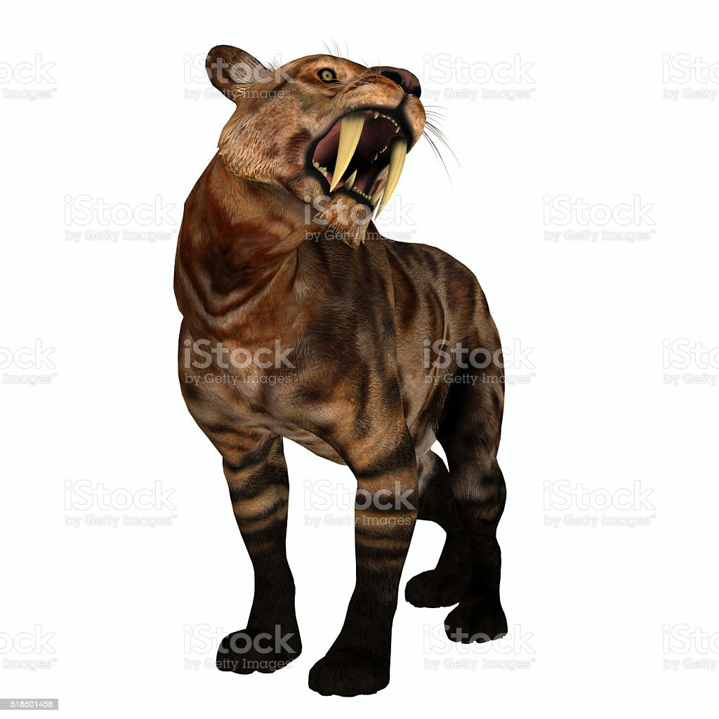 Saber-tooth Cat Growl stock photo