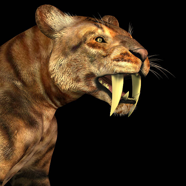 Saber-tooth Cat on Black stock photo
