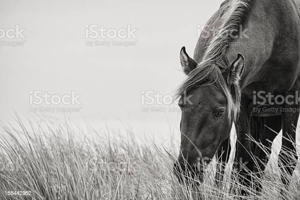 Sable horse picture id155442952?b=1&k=6&m=155442952&s=612x612&h=kmcirn4haojt0kymfp p1sngwvi3nlmtjy2zcd6ofyy=