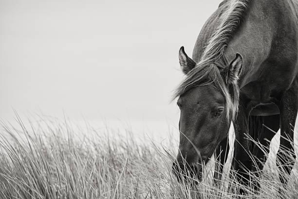 Sable horse picture id155442952?b=1&k=6&m=155442952&s=612x612&w=0&h=t4uc0cpthkcpvbv zb5tpawxlgn4yv  dcvva8bppc0=