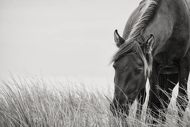 sable horse - animals in the wild stock pictures, royalty-free photos & images