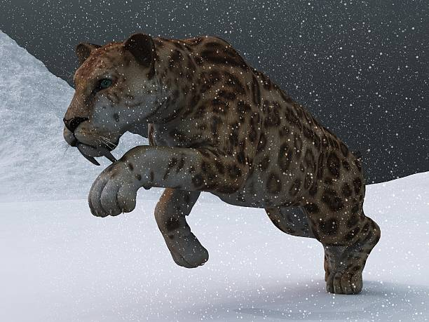 Sabre-toothed tiger in ice age blizzard stock photo
