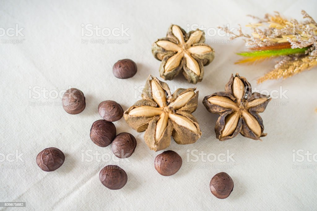 Sacha inchi peanut seed on white background. To eat as medicine or processed into products. stock photo