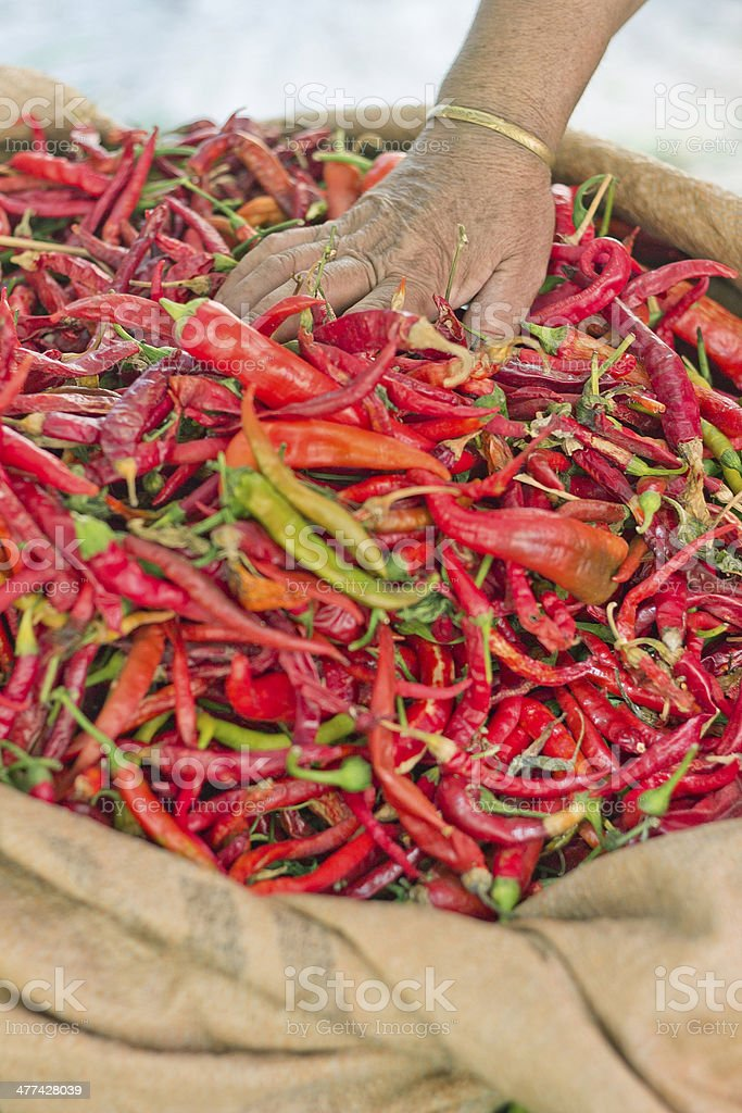 Sack of Chili Pepper royalty-free stock photo