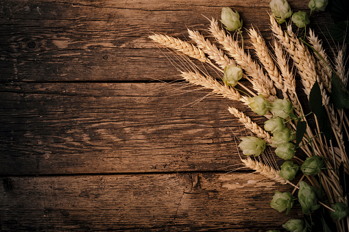 istock Sack of hops and sheaf of wheat on rustic wooden vintage background. 1044703750
