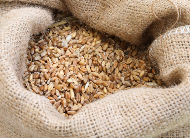 sack with ancient grains to make flour and bread stock photo
