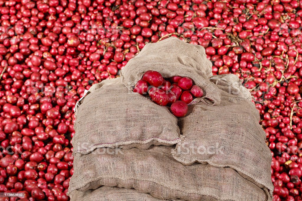 Sacks of Potatoes royalty-free stock photo