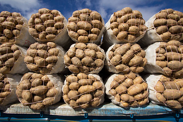 Sacks of potatoes stock photo