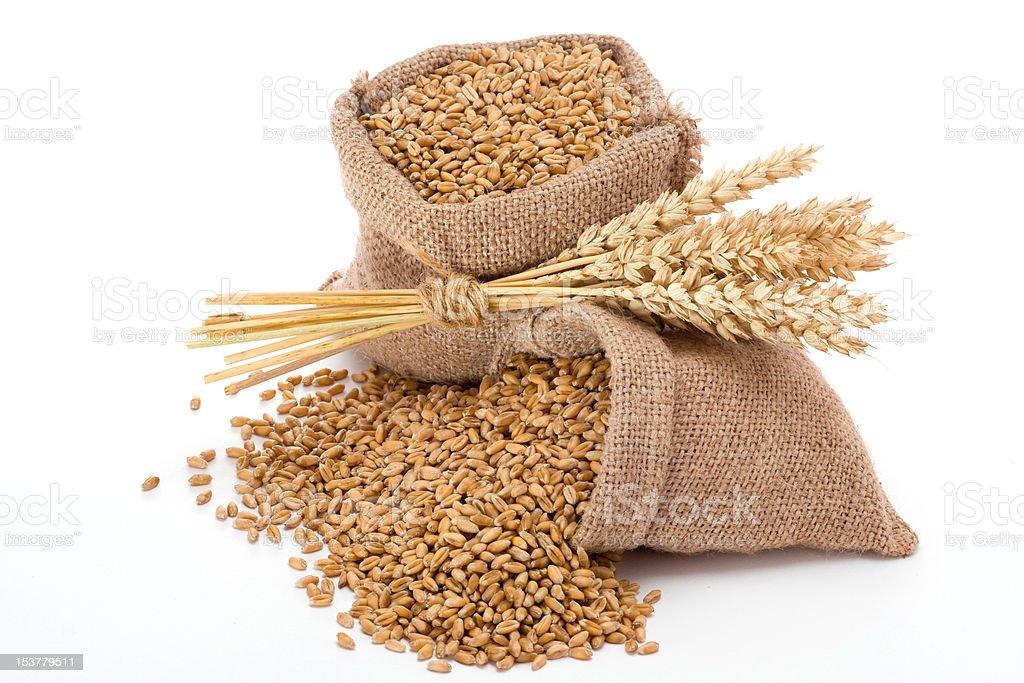 Sacks of Wheat on White royalty-free stock photo