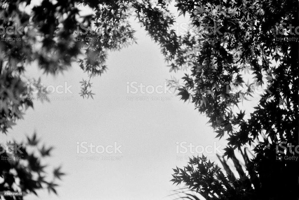 Sacramento Tree View stock photo