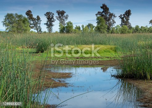 Marsh at the Sacramento National Wildlife Refuge featuring grasses and aquactic plants. The SNWR Complex is located in northern California, in the valley of the Sacramento River