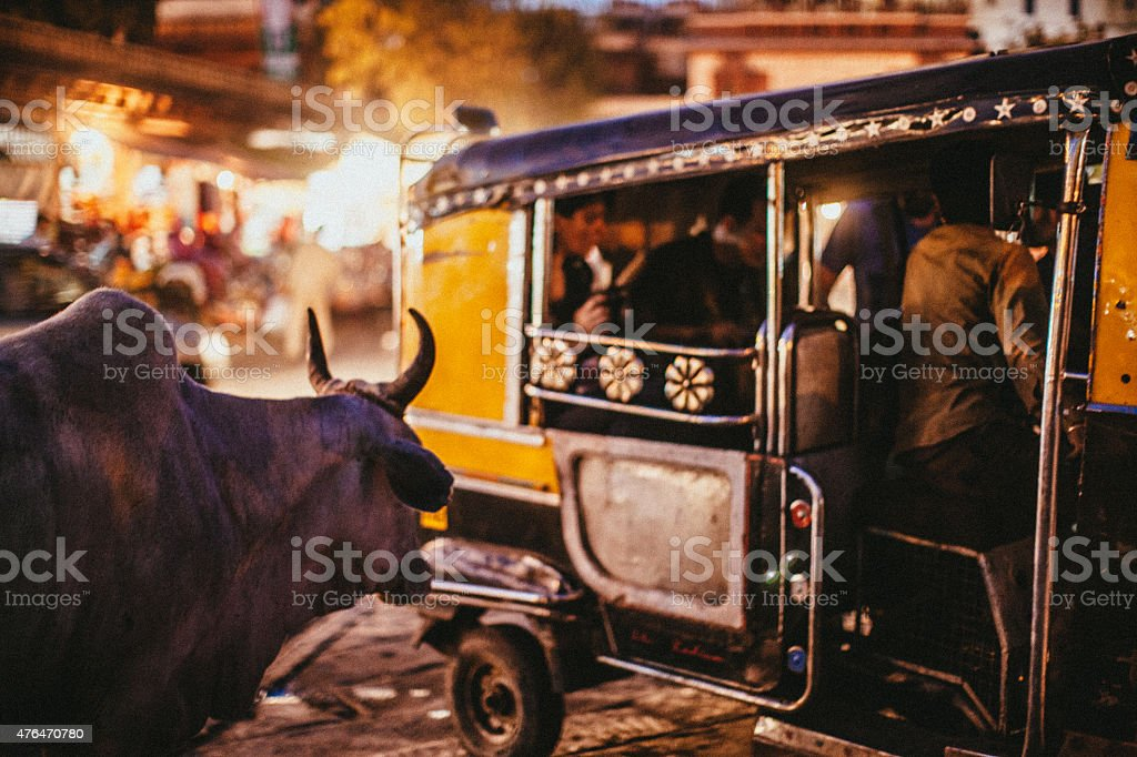 Sacred cow stock photo
