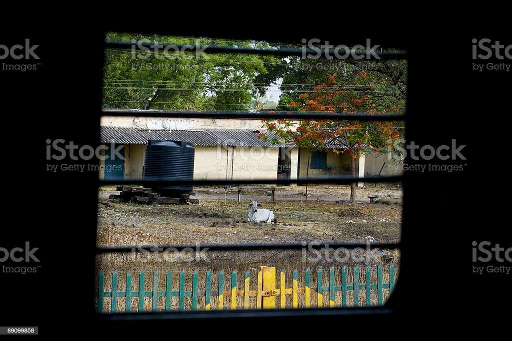Vaca sagrada frente al tren foto de stock libre de derechos