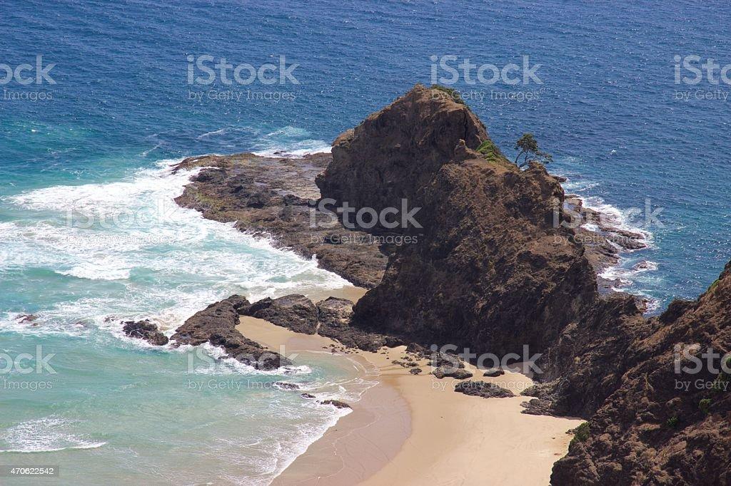 Sacred pohutukawa tree at Cape Reinga, New Zealand stock photo