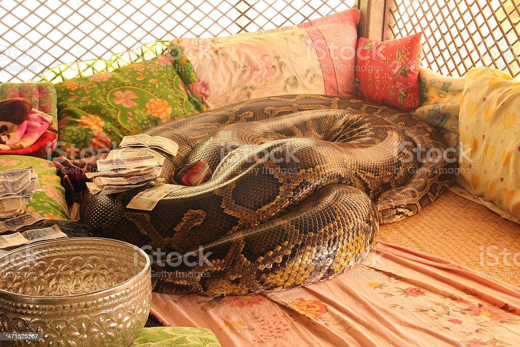 Sacred python snake stock photo