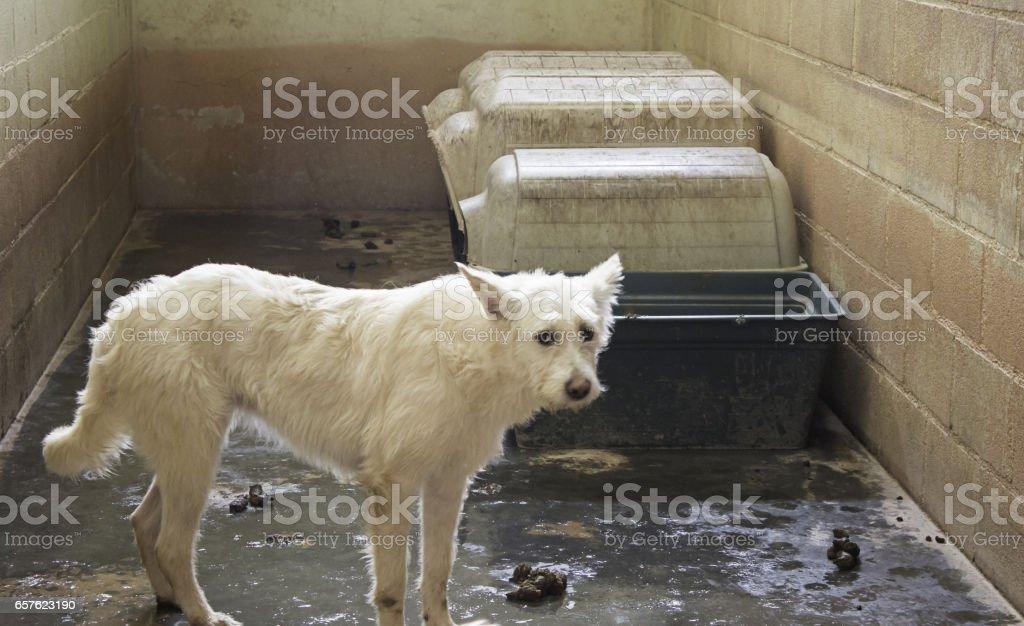 Cães abandonados tristes - foto de acervo