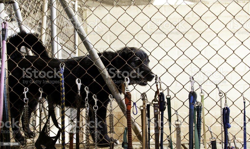 Sad abandoned dogs royaltyfri bildbanksbilder