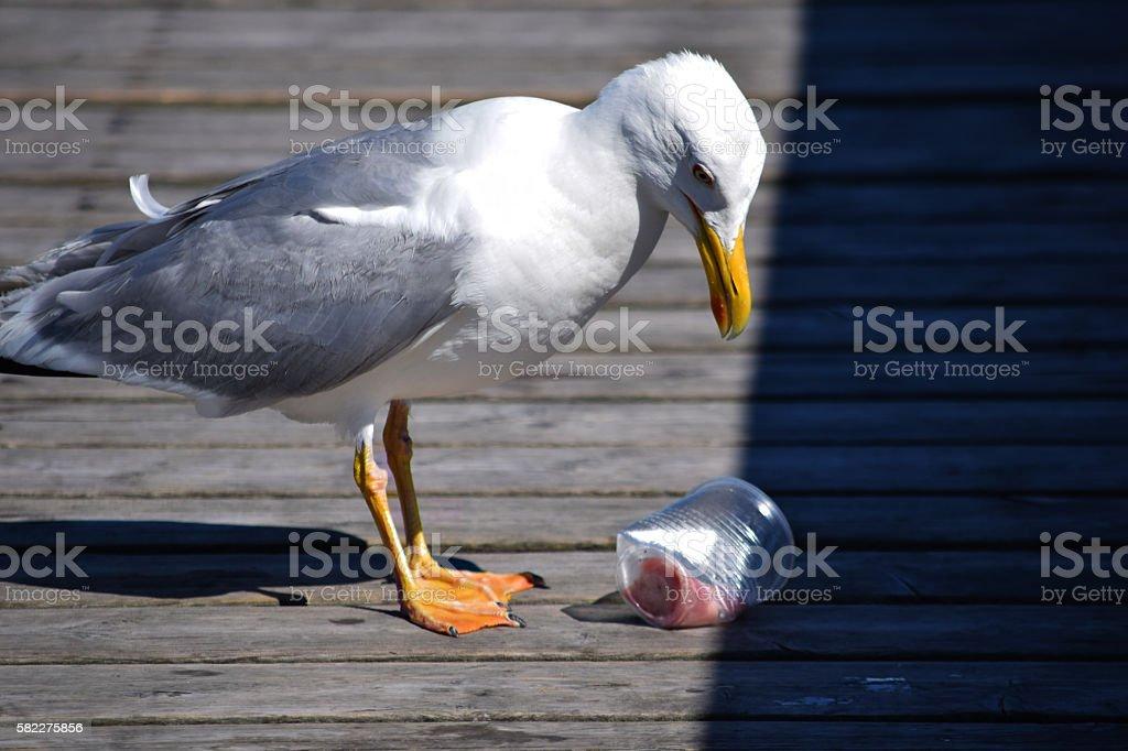 Sad bird and trash - foto de acervo