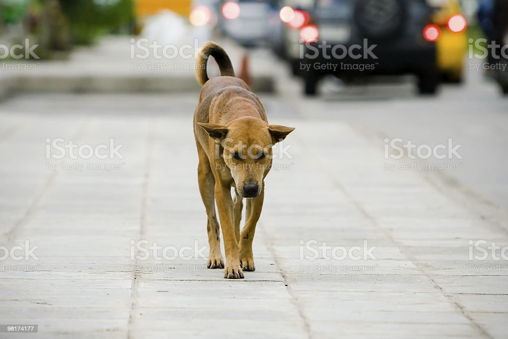 Sad brown dog walking alone on a sidewalk royalty-free stock photo