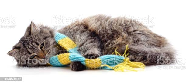 Sad cat in a scarf picture id1195875157?b=1&k=6&m=1195875157&s=612x612&h=v6oh3m9oidt4gfypnesuwhegva7 s0j15ebqohfbsxw=