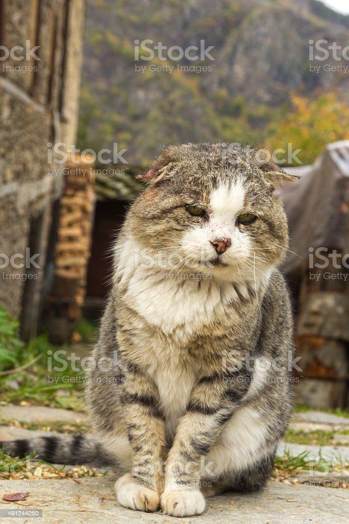 Sad cat in nature stock photo