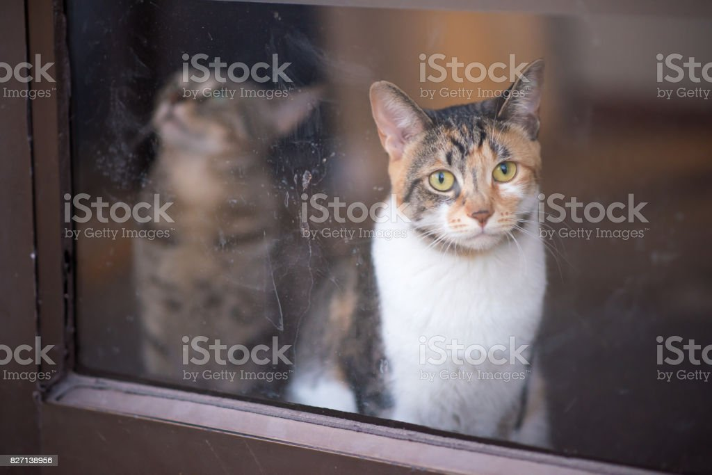 Sad cat wants to come out and play stock photo