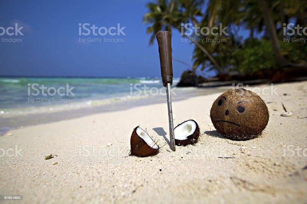 Sad Coconut lost a friend! royalty-free stock photo