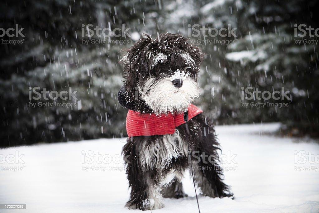 Sad Cold Puppy Snow Winter stock photo