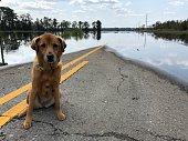 Sad dog at flooded road