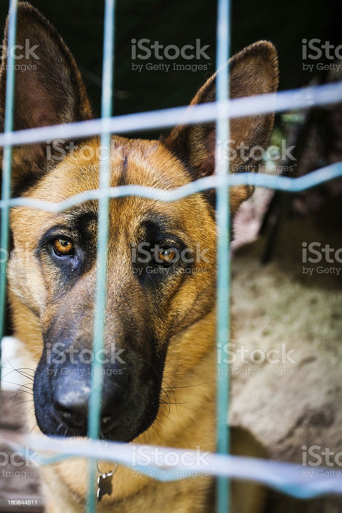 Sad Dog Behind the Bars of a Cage royalty-free stock photo