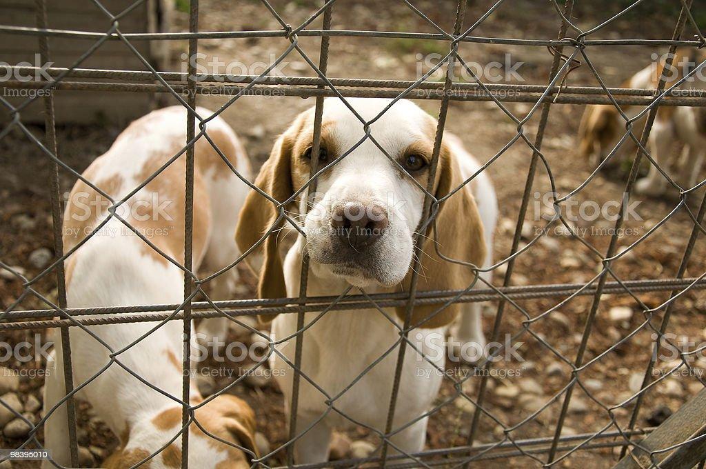 Sad dog behind the fence royalty-free stock photo