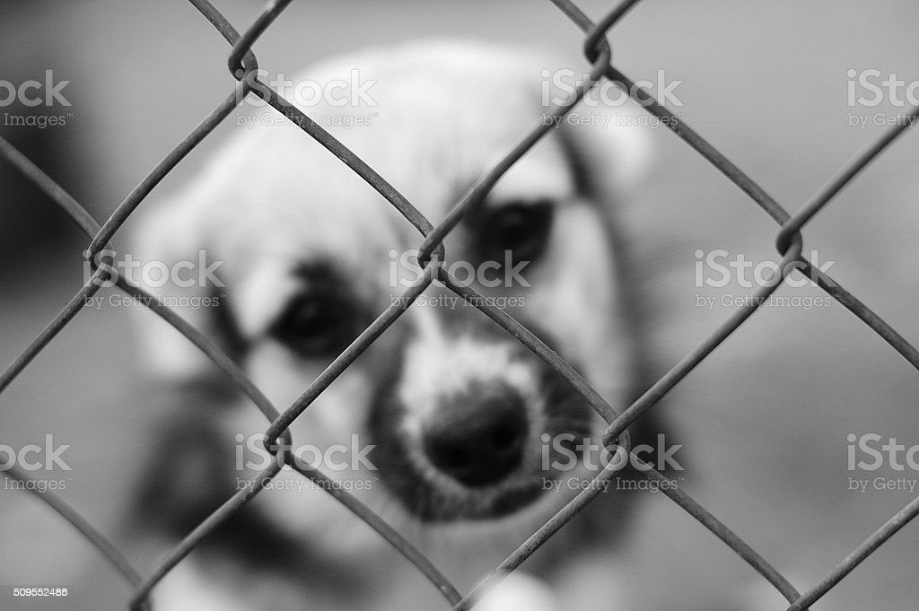 Sad dog in a cage stock photo