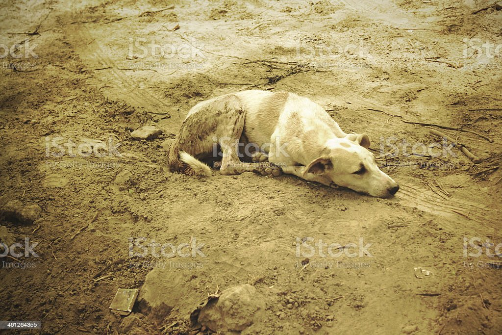 Sad Dog in Sand royalty-free stock photo