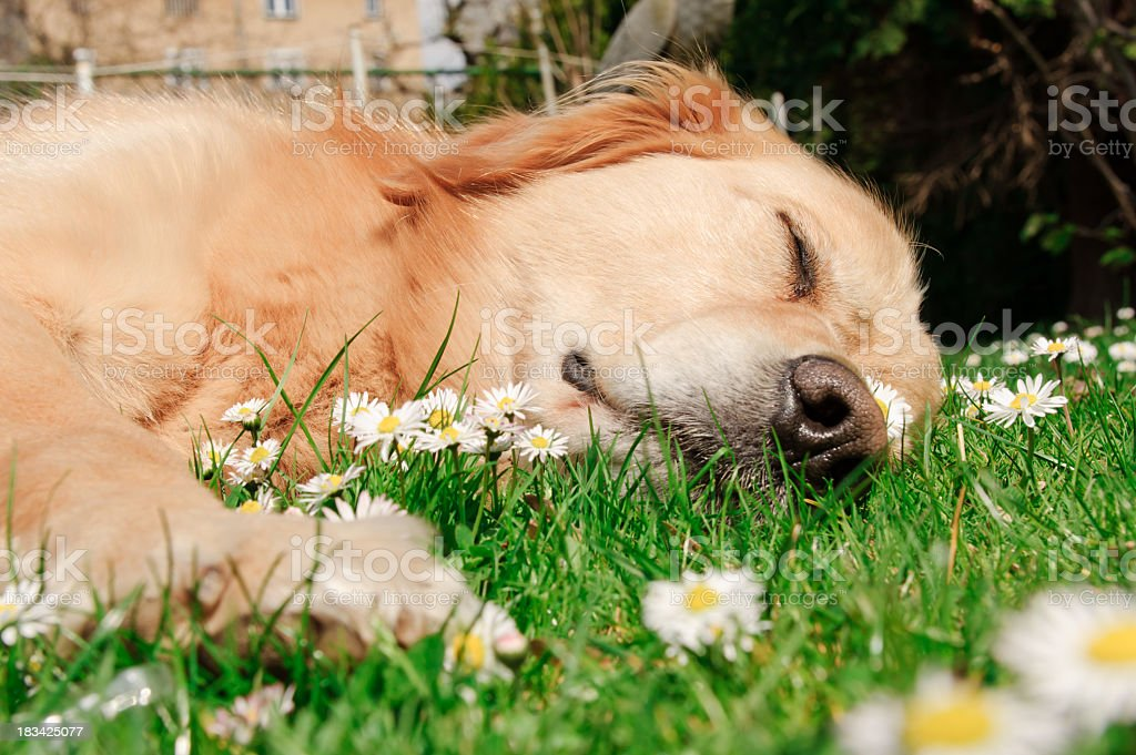 Sad dog in spring royalty-free stock photo