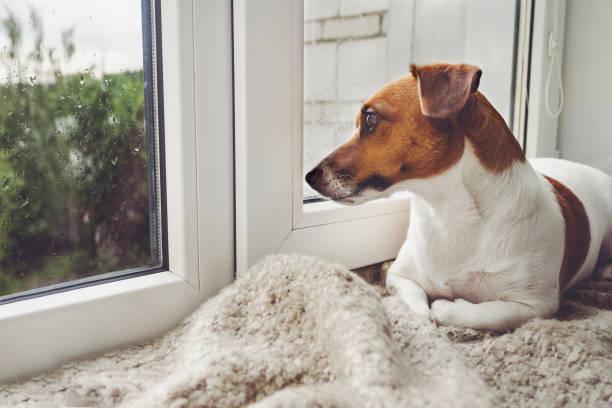 Traurig, Hund liegt auf dem Fenster und seinem Besitzer warten. – Foto