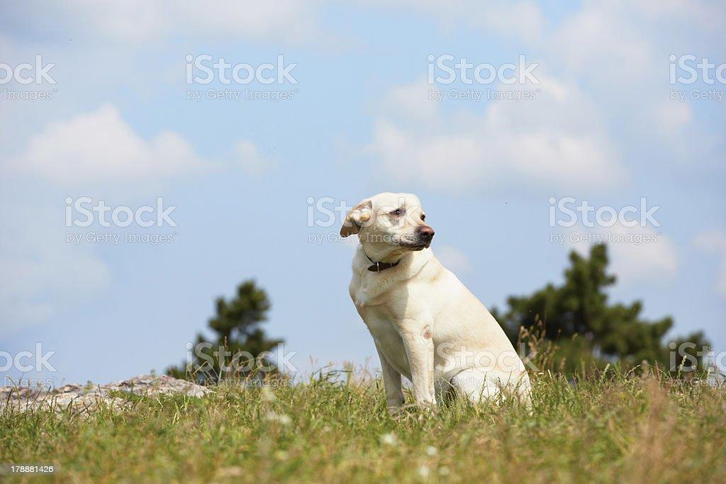 Sad dog on meadow royalty-free stock photo