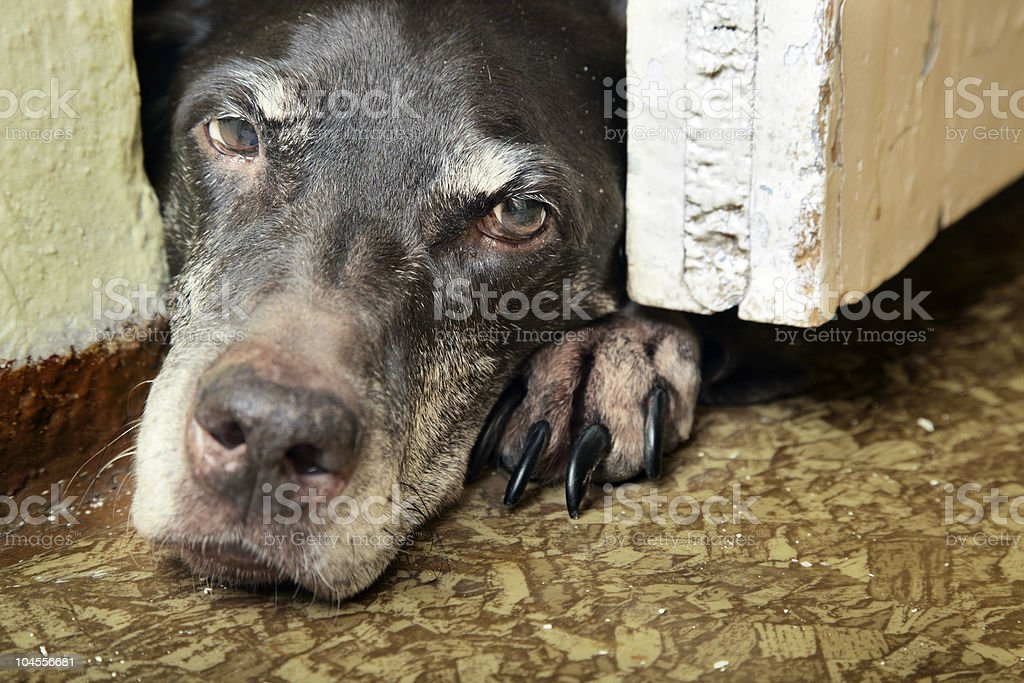 Sad dog royalty-free stock photo