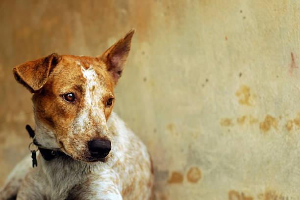 Sad dog picture id144282882?b=1&k=6&m=144282882&s=612x612&w=0&h=iyy7ax8v thmo9ofgyaxj89fndvpgveedjokudtxq8k=