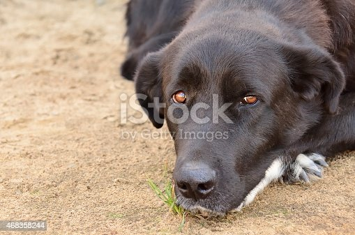 Sad Dog Stock Photo & More Pictures of 2015