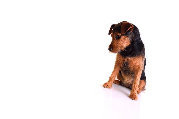 Sad dog picture id539093537?b=1&k=6&m=539093537&s=612x612&w=0&h=68quxyae2bzsq8xahqaiufkhehvhiunoeundmhyrlig=