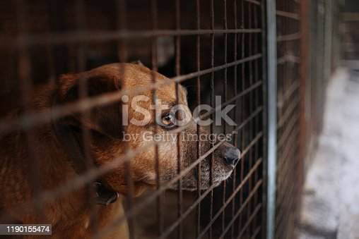 sad dog waiting for adoption in animal shelter cage